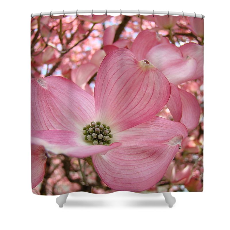 Dogwood Shower Curtain featuring the photograph Office Art Prints Pink Flowering Dogwood Tree 1 Giclee Prints Baslee Troutman by Baslee Troutman