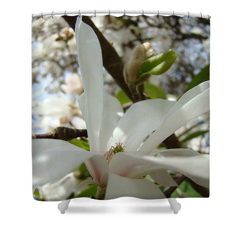 Magnolia Shower Curtain featuring the photograph Office Art Prints White Magnolia Flower 6 Giclee Prints Baslee Troutman by Baslee Troutman