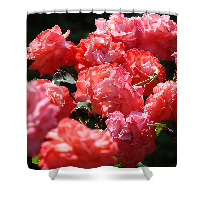 Rose Shower Curtain featuring the photograph Office Art Roses Pink Rose Flowers Floral Garden by Baslee Troutman