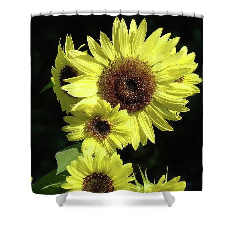 Sunflower Shower Curtain featuring the photograph Office Art Sunflowers Art Prints Sun Flower Baslee Troutman by Baslee Troutman