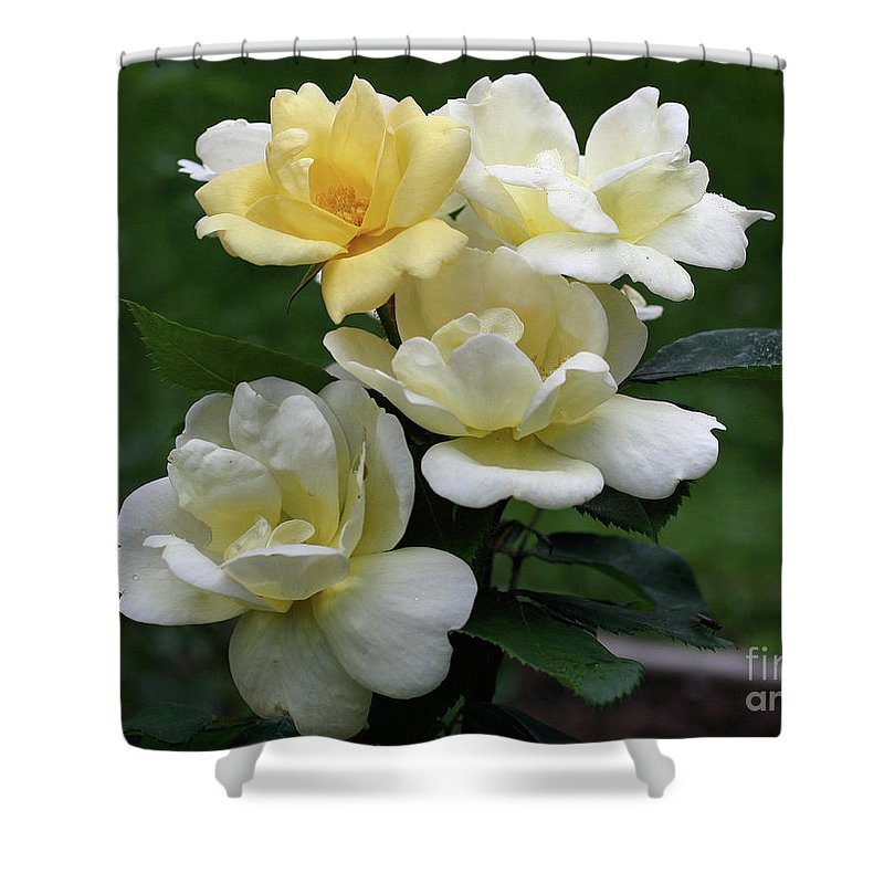 Flower Shower Curtain featuring the photograph Oh So Pretty Roses by Smilin Eyes Treasures