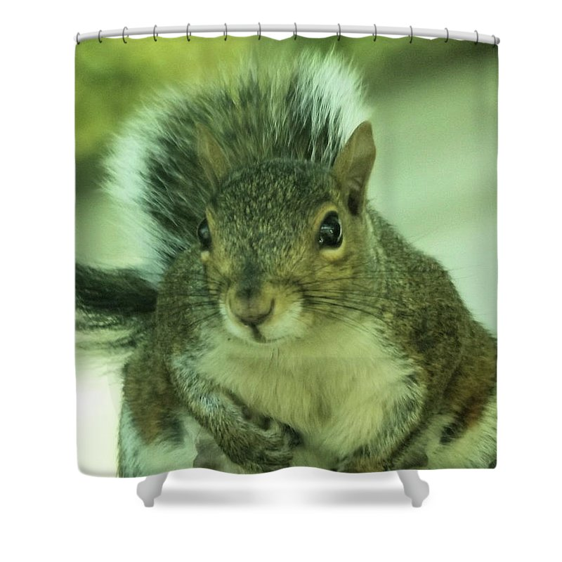 Squirrels Shower Curtain featuring the photograph Ok Boss by Angelcia Wright