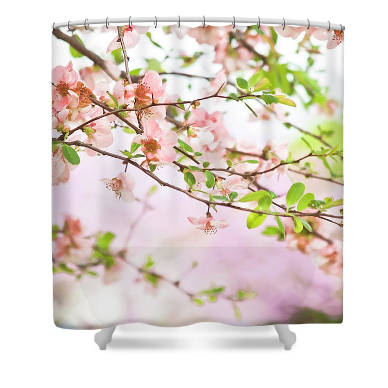 Blossoms Shower Curtain featuring the photograph Oklahoma Spring by Toni Hopper