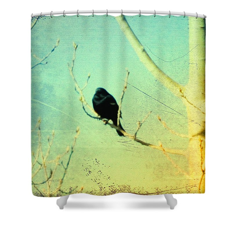 Blackbird Shower Curtain featuring the photograph Old Crow Medicine Show by Bill Cannon
