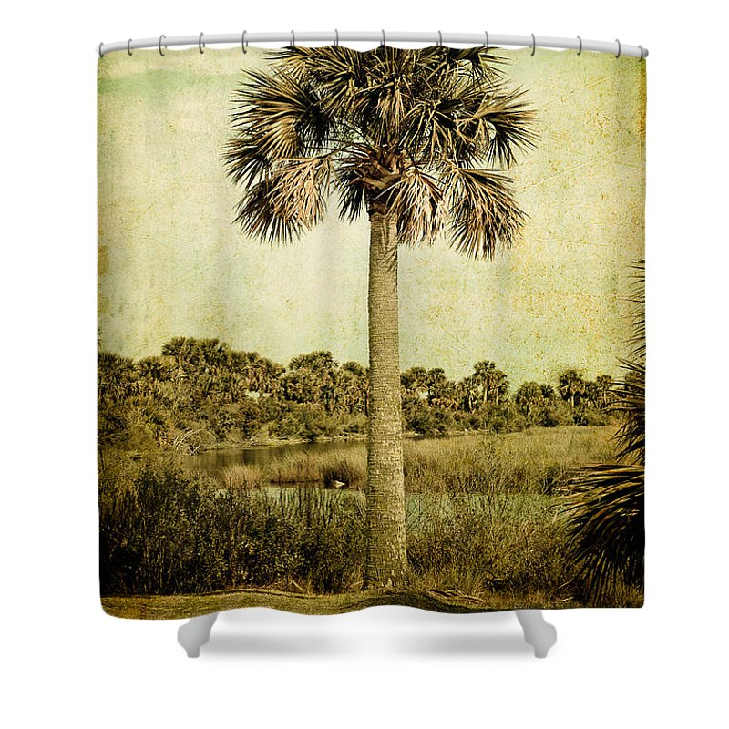 Palm Shower Curtain featuring the photograph Old Florida Palm by Rich Leighton