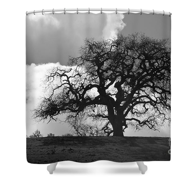 Oak Tree Shower Curtain featuring the photograph Old Oak Against Cloudy Sky by Sharon Foelz