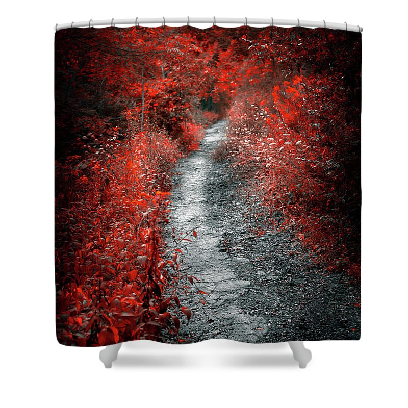 Path Shower Curtain featuring the photograph Old Path In Red Forest by Elena Elisseeva
