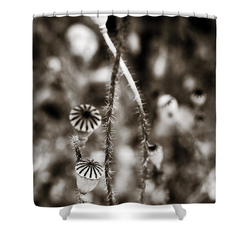 Floral Shower Curtain featuring the photograph Old Poppies by Marilyn Hunt