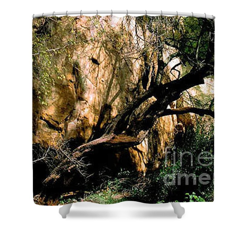 Trees Shower Curtain featuring the photograph Old Tree by Kathy McClure