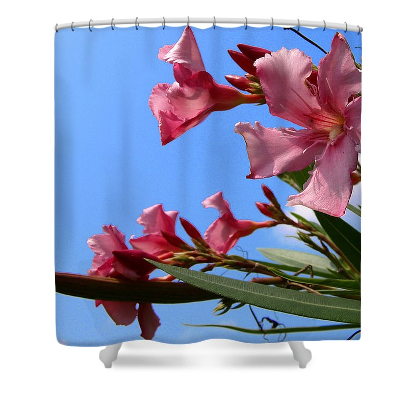 Flower; Florida; Oleander; Purple; Pink; Lavander; Sky; Blue; Clouds; Drought; Leaves; Green; South; Shower Curtain featuring the photograph Oleander Flowers Wilting In The Brutal Florida Sun by Allan Hughes