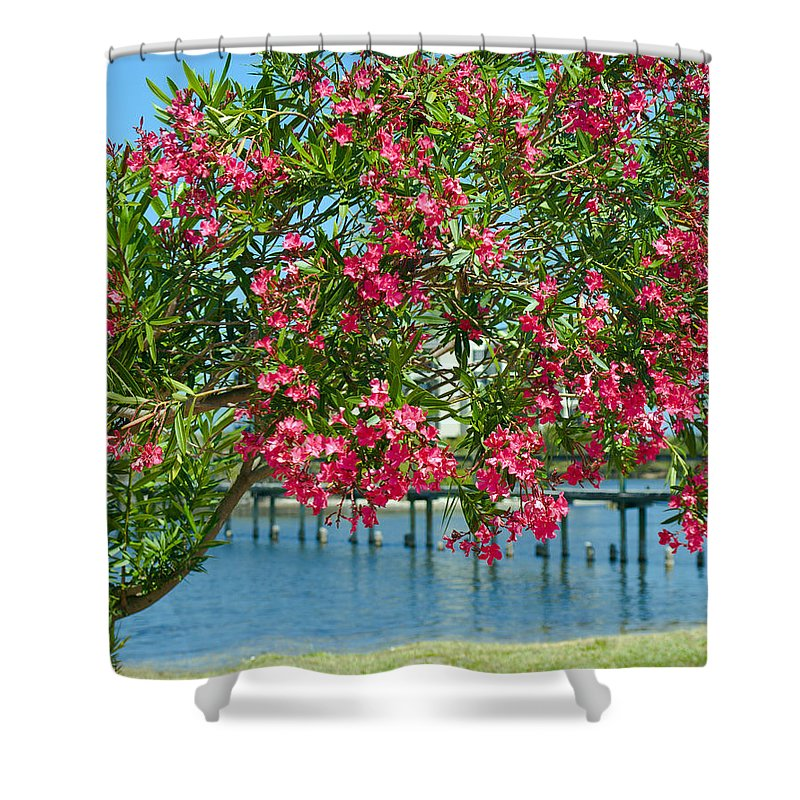 Florida; Indian; River; Melbourne; Nerium; Oleander; Red; Pink; Flower; Bush; Shrub; Poison; Poisono Shower Curtain featuring the photograph Oleander On Melbourne Harbor In Florida by Allan Hughes