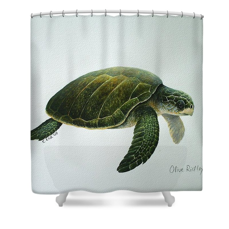 Olive Ridley Turtle Shower Curtain featuring the painting Olive Ridley Turtle by Christopher Cox
