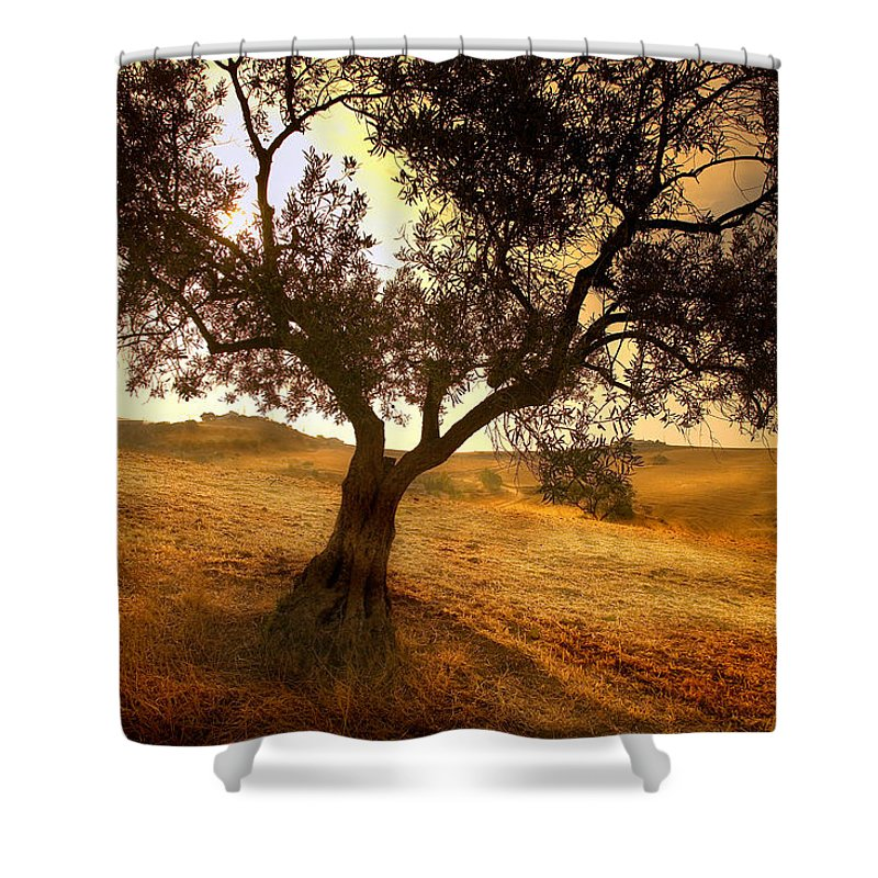 Landscape Shower Curtain featuring the photograph Olive Tree Dawn by Mal Bray