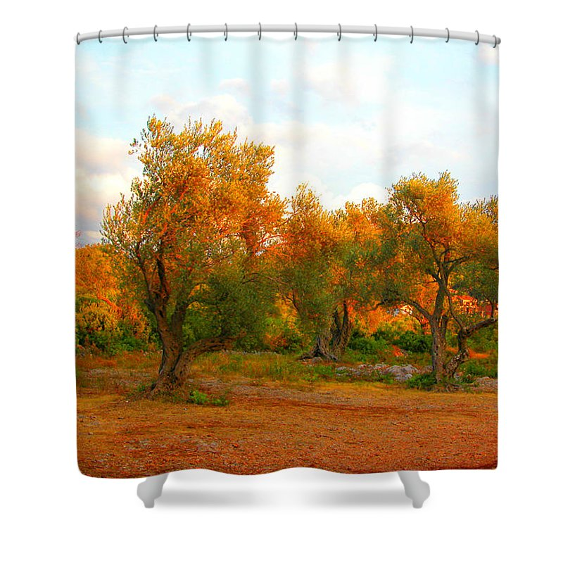 Molive Shower Curtain featuring the photograph Olive Tree Forest by Marko Mitic