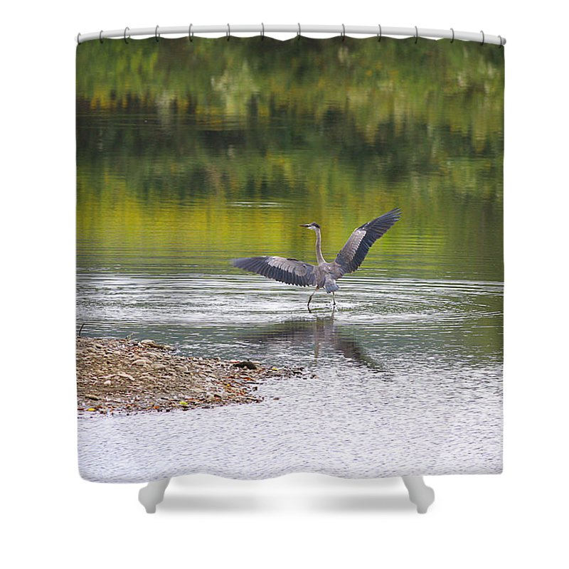 Heron Shower Curtain featuring the photograph On A Stroll In The River by Deborah Benoit