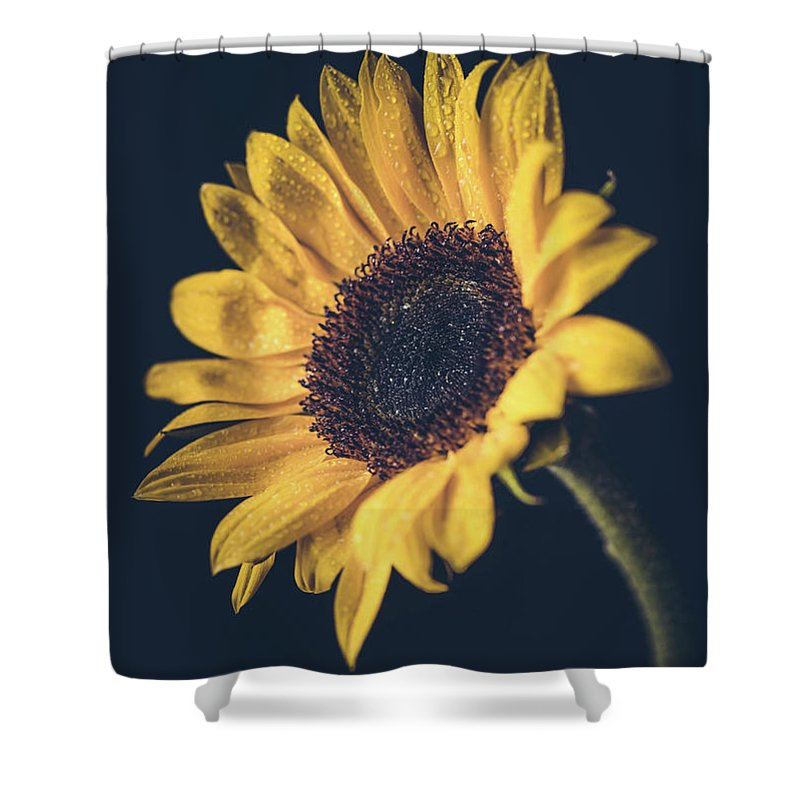 Sunflower Shower Curtain featuring the photograph On An Island by Lawrence Morgan