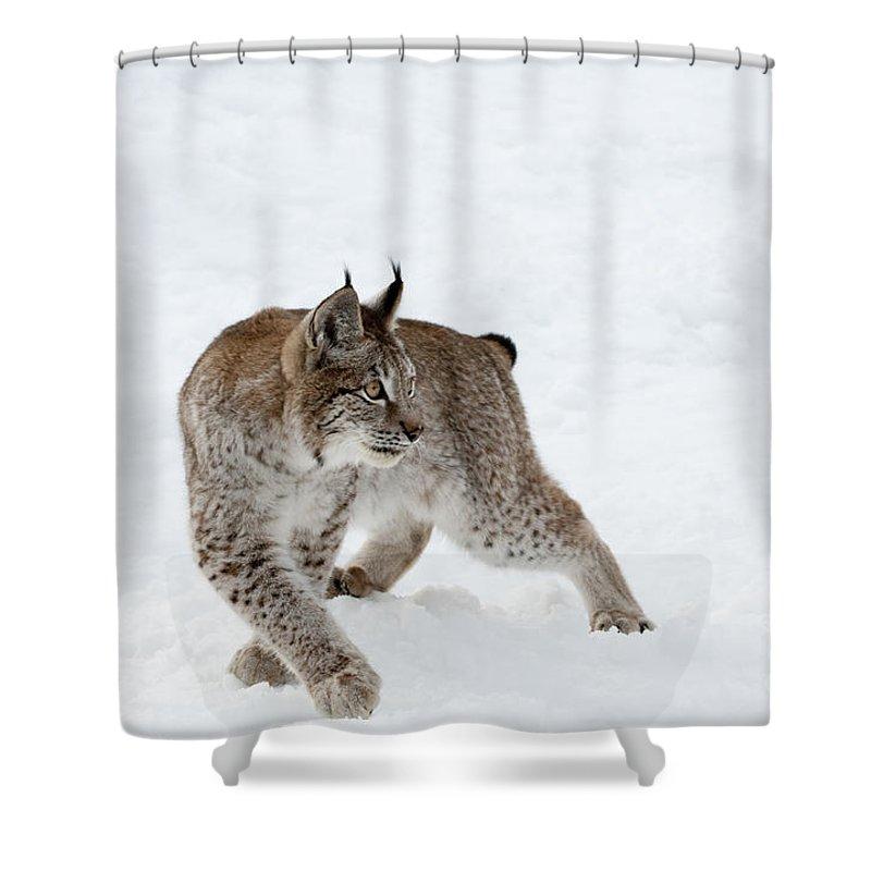Lynx Shower Curtain featuring the photograph On High Alert by Sandra Bronstein