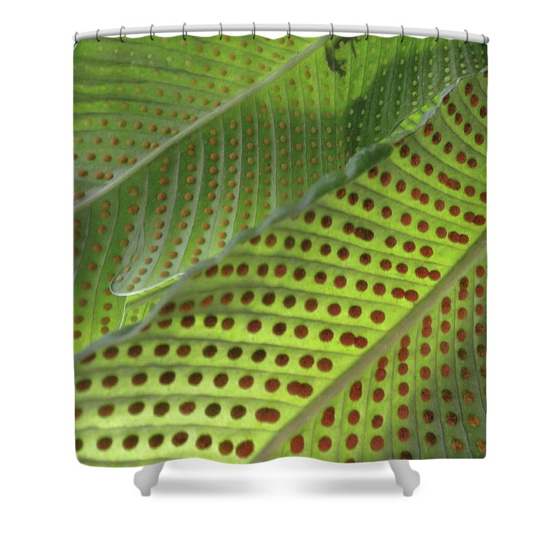 Tropical Plants Shower Curtain featuring the photograph On The Dotted Lines by Trish Hale