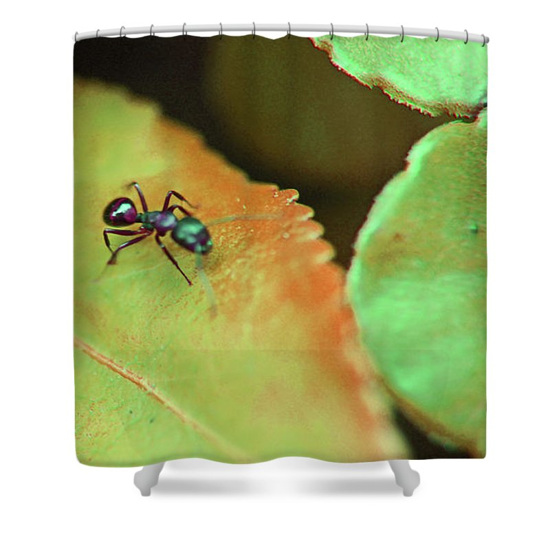 Macro Shower Curtain featuring the photograph On The Hunt by Donald C Leight Jr