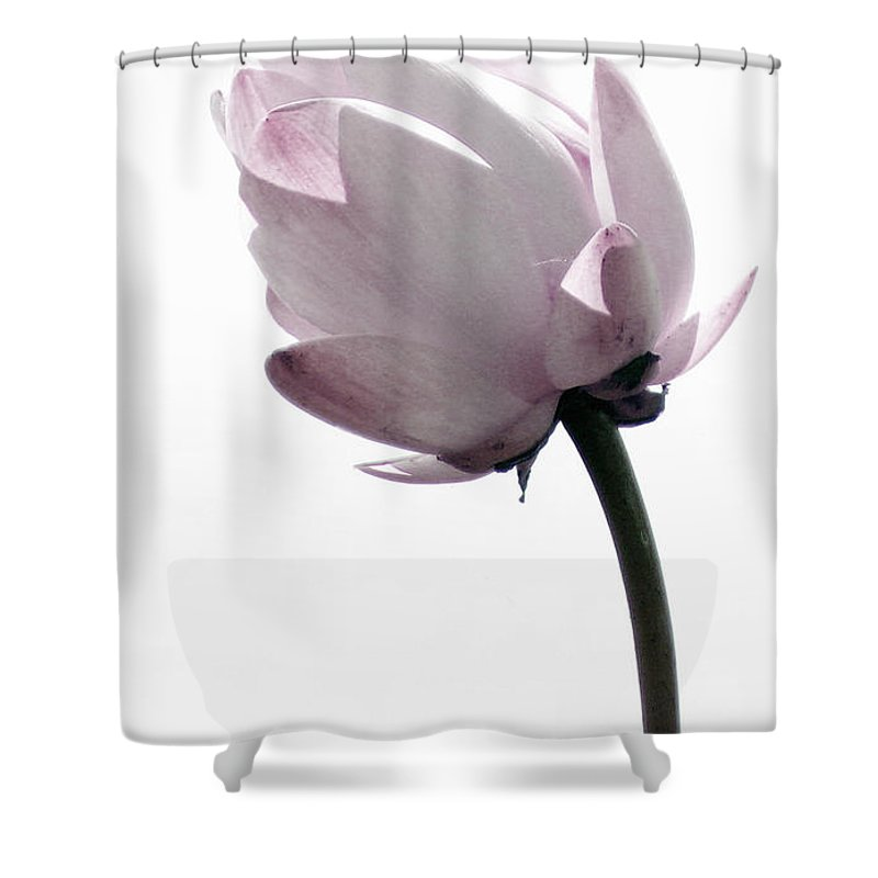 Lotus Shower Curtain featuring the photograph On The Inside by Amanda Barcon