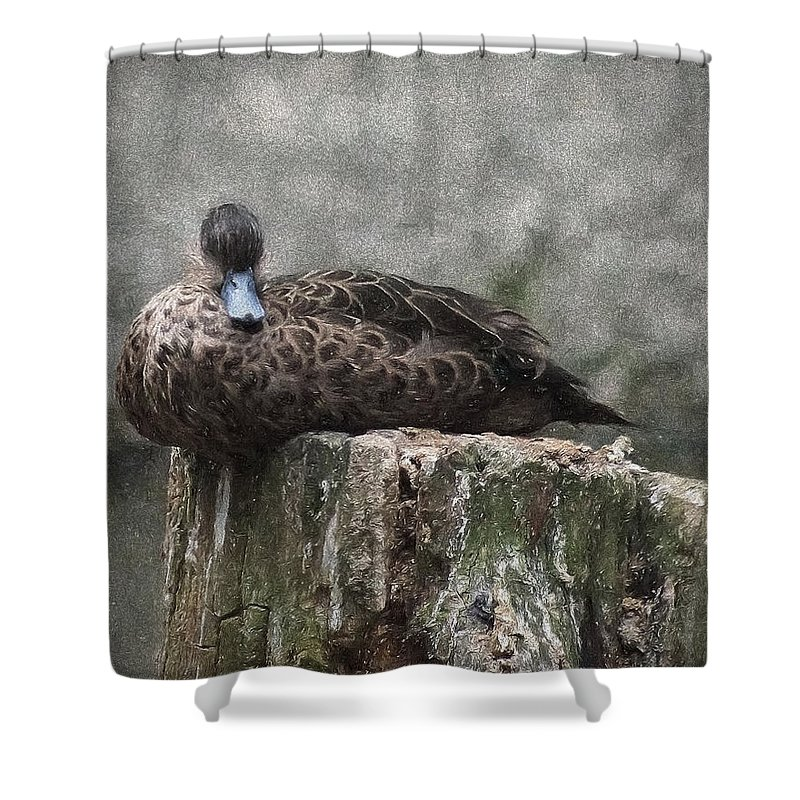 Ann Keisling Shower Curtain featuring the photograph On The Stump by Ann Keisling