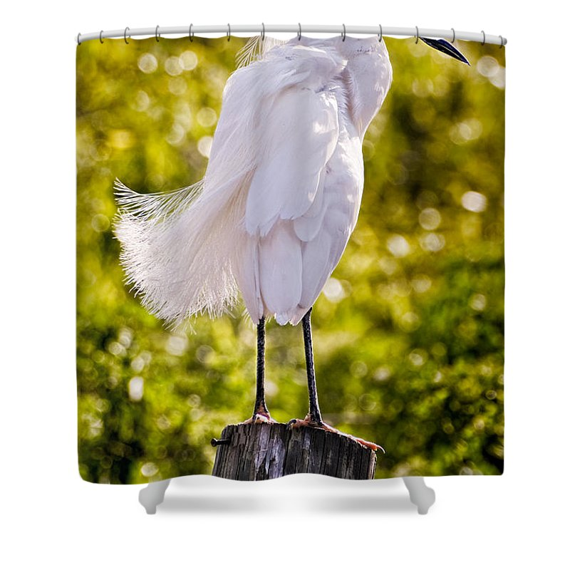 snowy Egret Shower Curtain featuring the photograph On Watch by Christopher Holmes