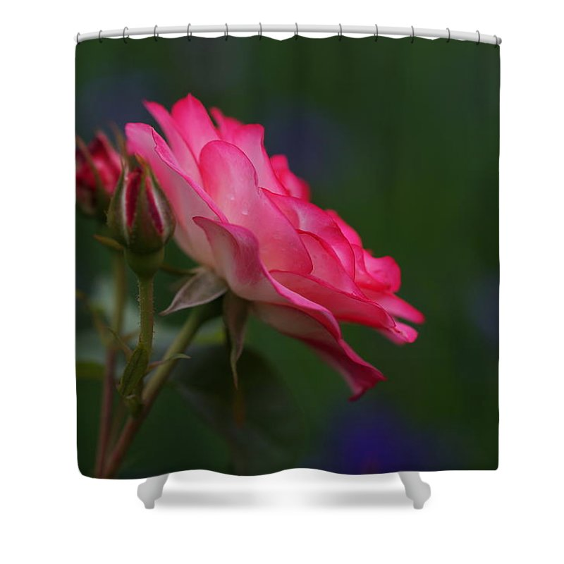 Rose Shower Curtain featuring the photograph One Better by Carrie Goeringer