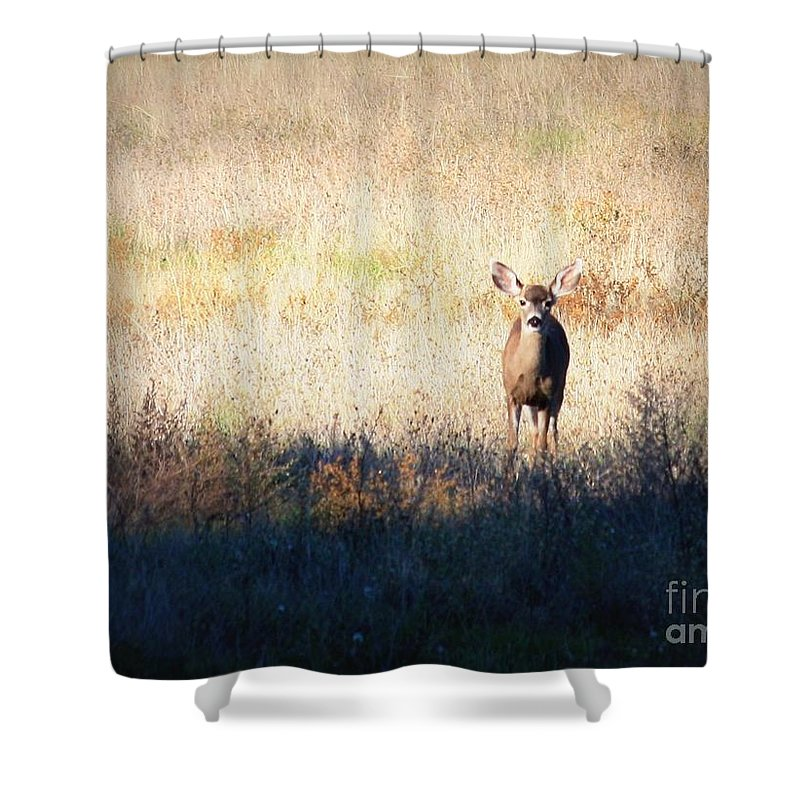 Wildlife Shower Curtain featuring the photograph One Cute Deer by Carol Groenen