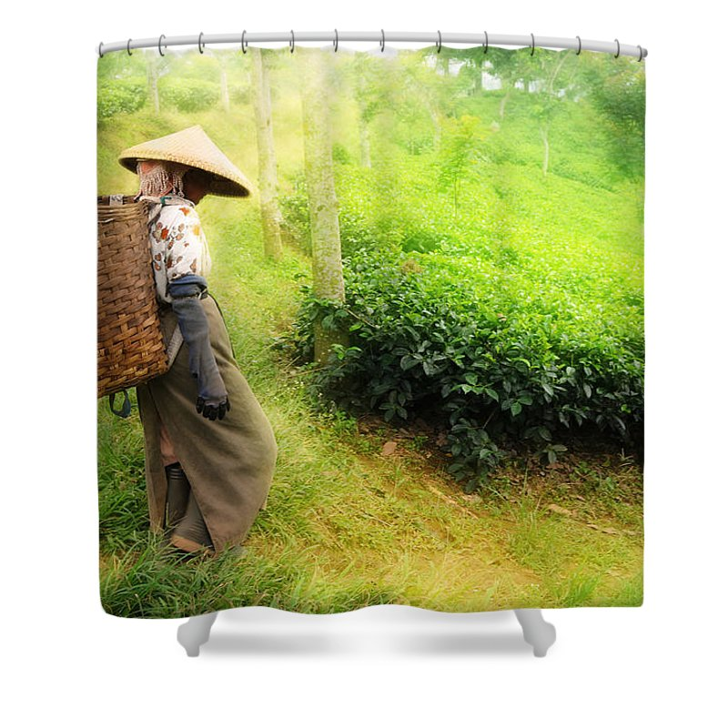 Agriculture Shower Curtain featuring the photograph One Day In Tea Plantation by Charuhas Images