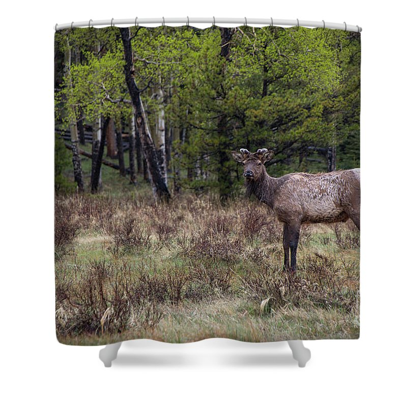 Elk Shower Curtain featuring the photograph One Last Glance Before I Go by Teresa Wilson