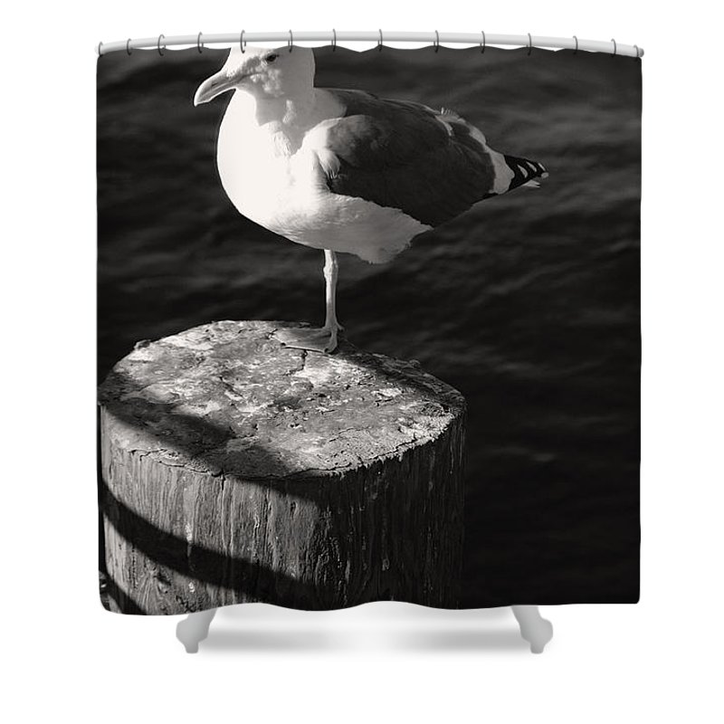 Seagul Shower Curtain featuring the photograph One Leg Up by Joanne Coyle