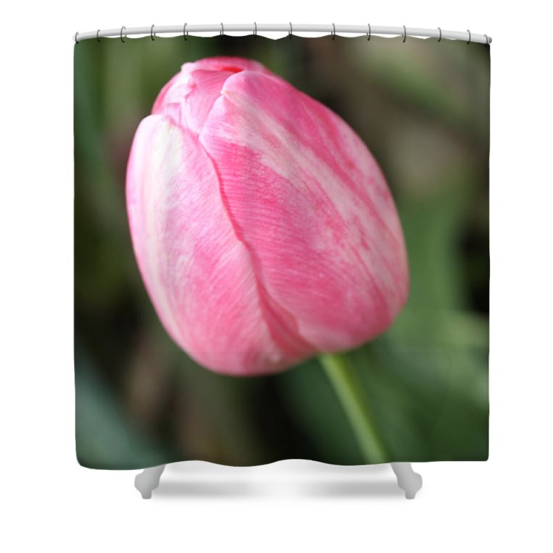 Pink Tulip Shower Curtain featuring the photograph One Lovely Pink Tulip by Carol Groenen