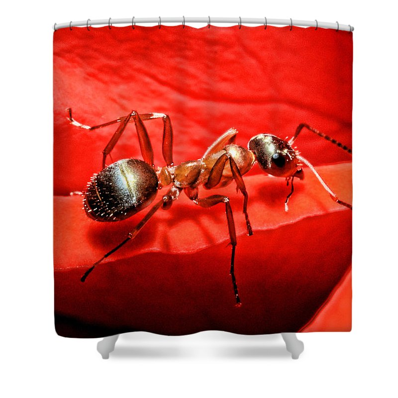 Ant Shower Curtains