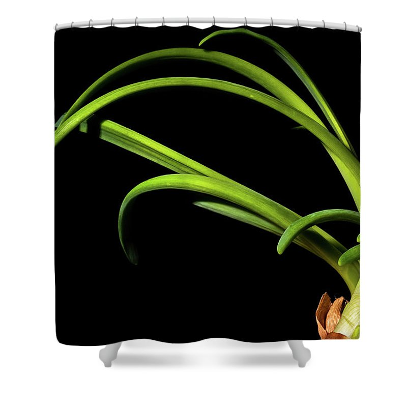 Onion Greens Shower Curtain featuring the photograph Onion Greens by Onyonet Photo Studios