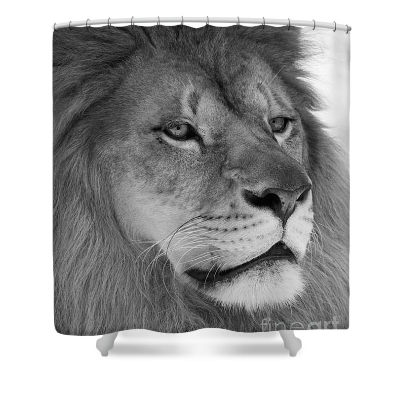 Lion Shower Curtain featuring the photograph Onyo #10 Black And White by Judy Whitton