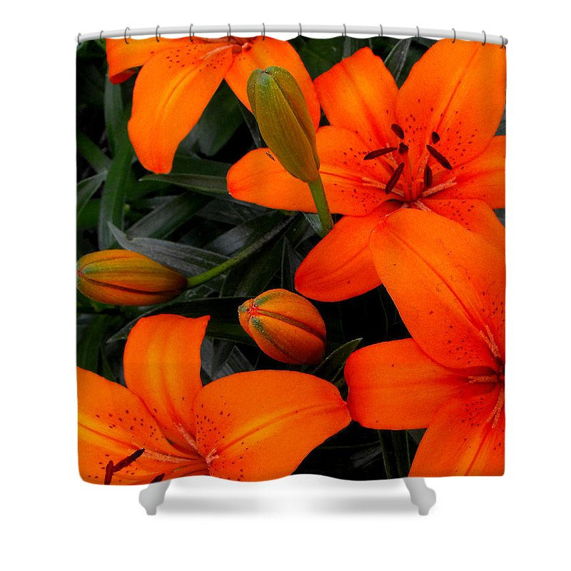 Botanical Shower Curtain featuring the photograph Open And Closed by Ruth Palmer
