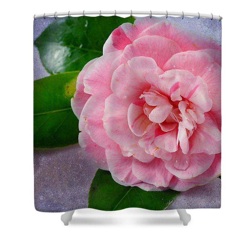 Macro Shower Curtain featuring the photograph Open Unto Thee by Georgiana Romanovna