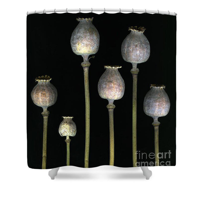 Scanography Shower Curtain featuring the photograph Opiates by Christian Slanec