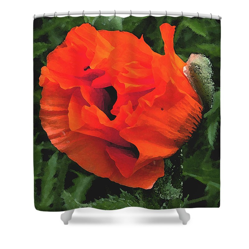 Opium Poppy Shower Curtain featuring the photograph Opium by Heather Lennox