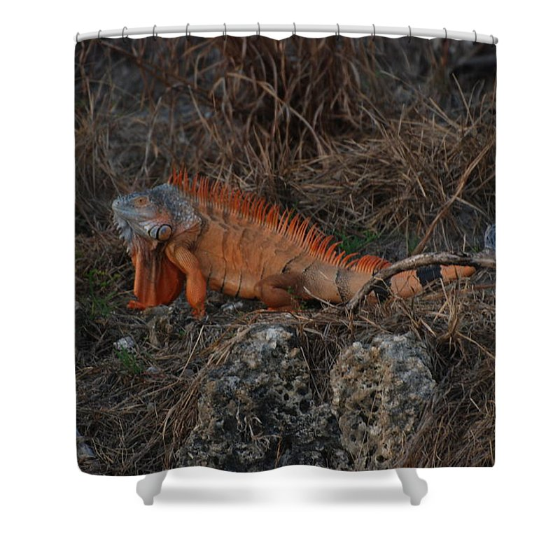 Brush Shower Curtain featuring the photograph Oranage Iguana by Rob Hans