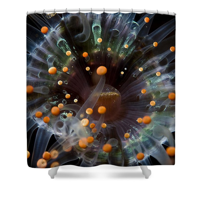 Indonesia Shower Curtain featuring the photograph Orange And Black Anemone, Komodo by Mathieu Meur
