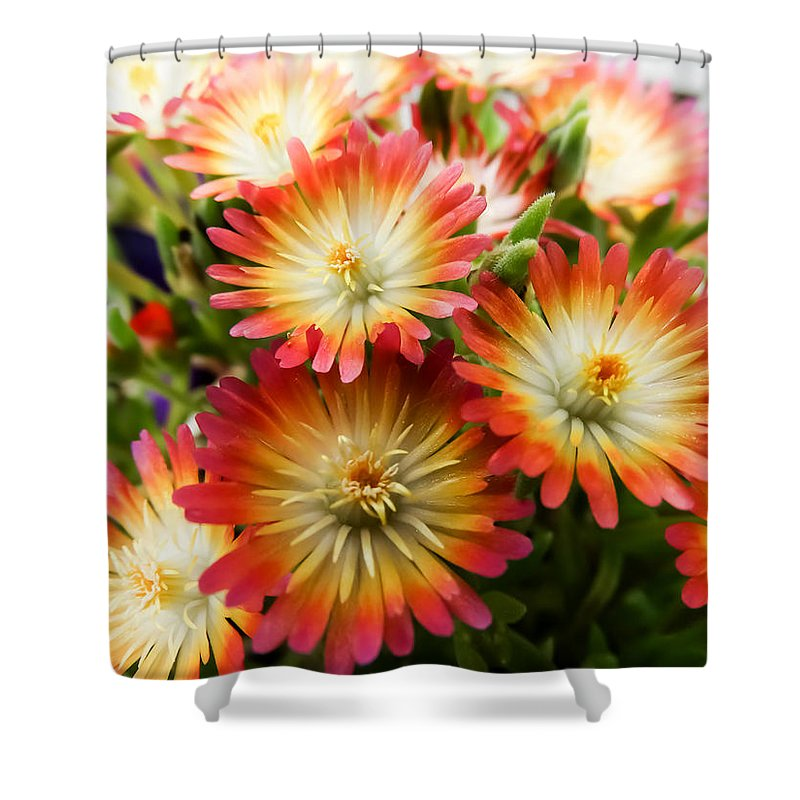 Orange And White Ice Plant Flowers Shower Curtain Featuring The Photograph