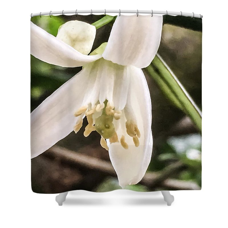 Flowers Shower Curtain featuring the photograph Orange Blossoms #2 by Denise DuFresne