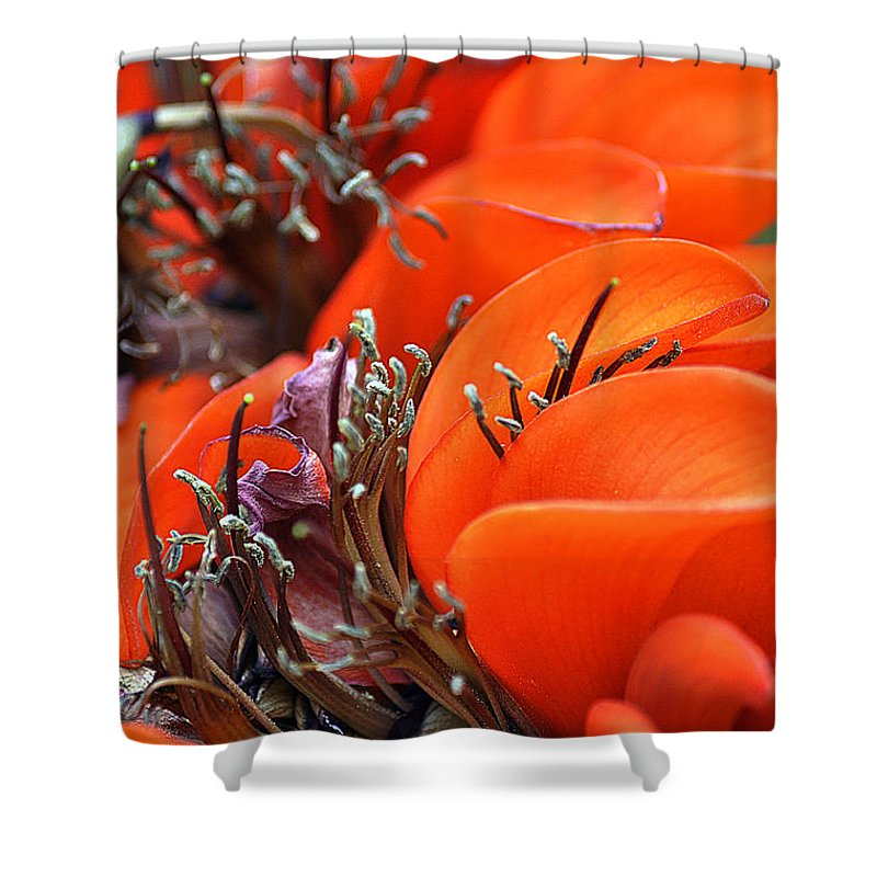 Clay Shower Curtain featuring the photograph Orange by Clayton Bruster