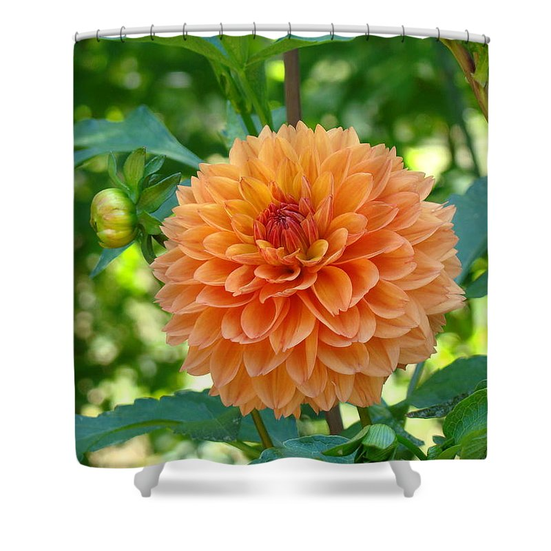 Dahlia Shower Curtain featuring the photograph Orange Dahlia Master Gardeners Art Collection Baslee Troutman by Baslee Troutman