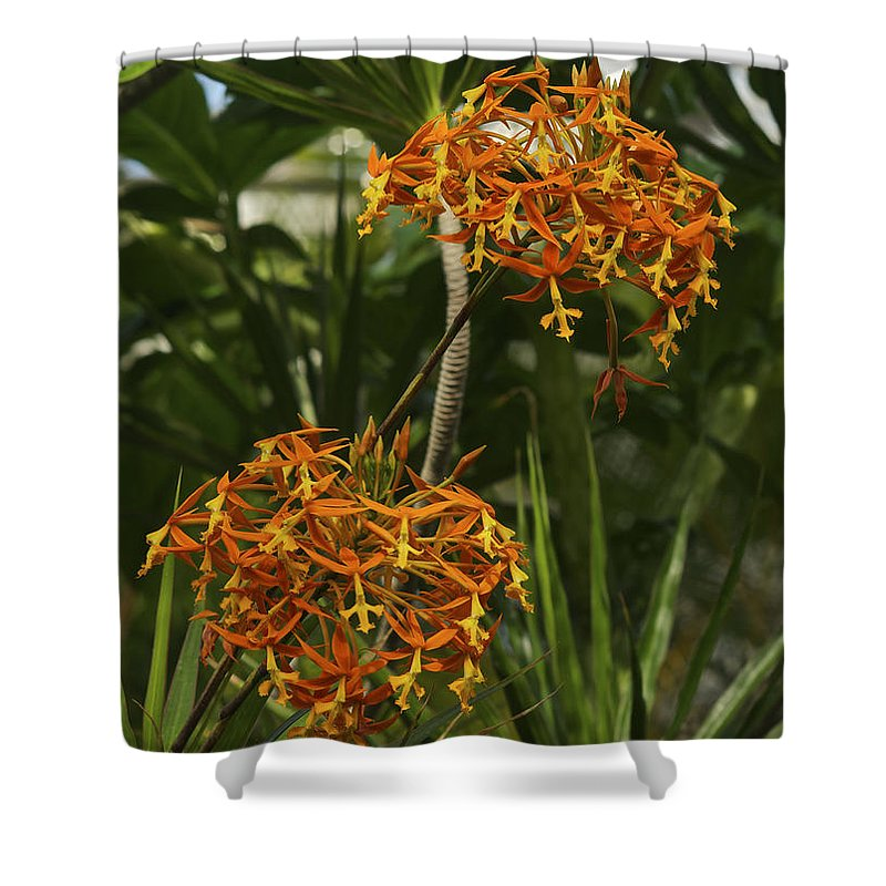 Hawaii Shower Curtain featuring the photograph Orange Globes by Michael Peychich