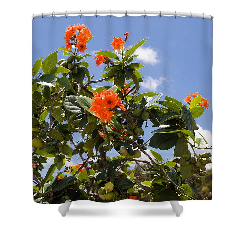 Hibiscus; Rosasinensis; Rosa; Sinensis; Rosa-sinensis; Tree; Bush; Shrub; Plant; Flower; Flowers; Fl Shower Curtain featuring the photograph Orange Hibiscus With Fruit On The Indian River In Florida by Allan Hughes