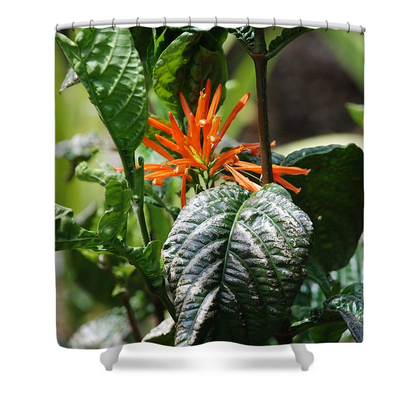Banana Leaf Shower Curtain featuring the photograph Orange Plants by Rob Hans