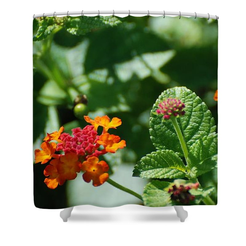 Orange Shower Curtain featuring the photograph Orange Red Flowers by Rob Hans
