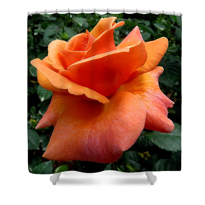Rose Shower Curtain featuring the photograph Orange Rose 1 by J M Farris Photography